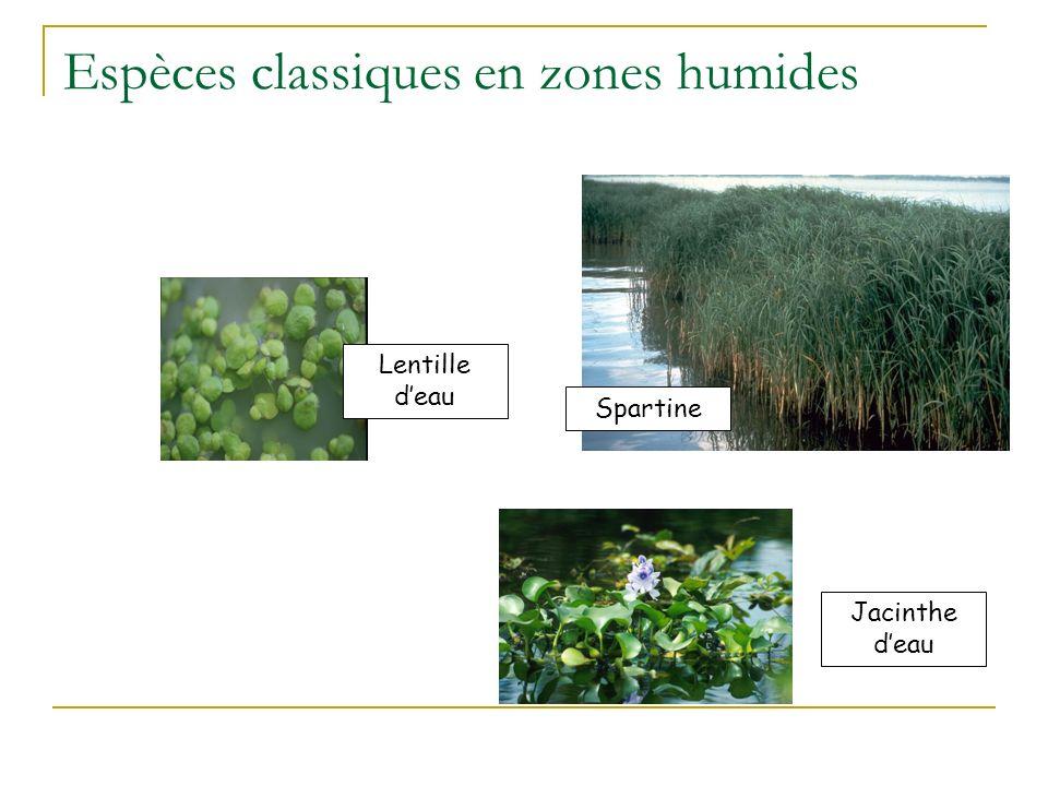 Choix des espèces utilisées en phytoremédiation Critères : Adaptation au milieu Biomasse et vitesse de croissance Tolérance aux polluants Capacités da