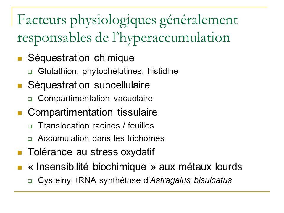 Les plantes hyperaccumulatrices Thlaspi caerulescens Arabidopsis halleri > 1 % Zn et 0.1% Cd Astragalus bisulcatus > 1 % Selenium