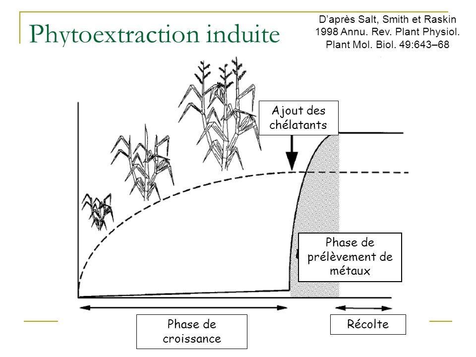 Phytoextraction continue Phase de prélèvement de métaux Phase de croissanceRécolte Daprès Salt, Smith et Raskin 1998 Annu. Rev. Plant Physiol. Plant M