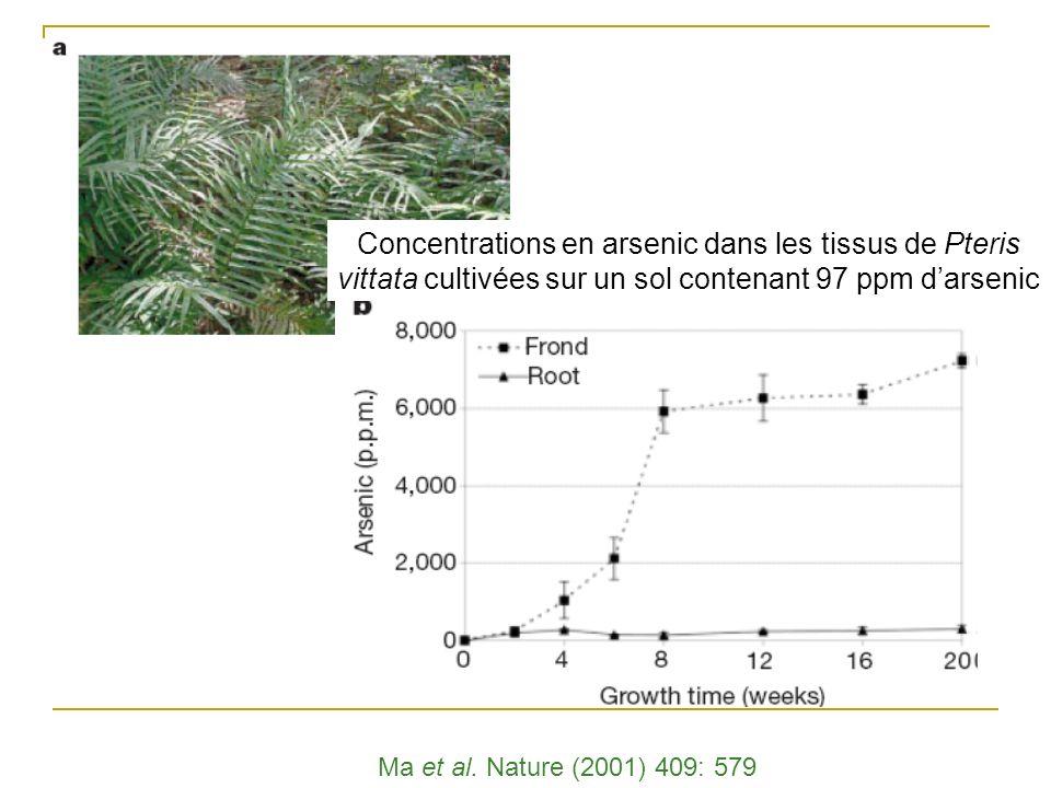Arsenic Sources : Ancien fongicide (vert de Paris) Traitement du bois : Chrome Cuivre Arsenic Phytoremédiation : Pteris vittata Mécanismes de toléranc