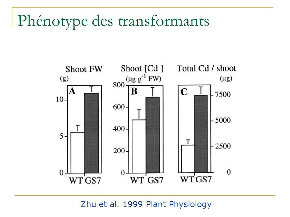 Problématique Si synthèse de phytochélatines, la - ECS est limitante pour la synthèse de glutathion Surexpression de la -ECS chez Brassica juncea