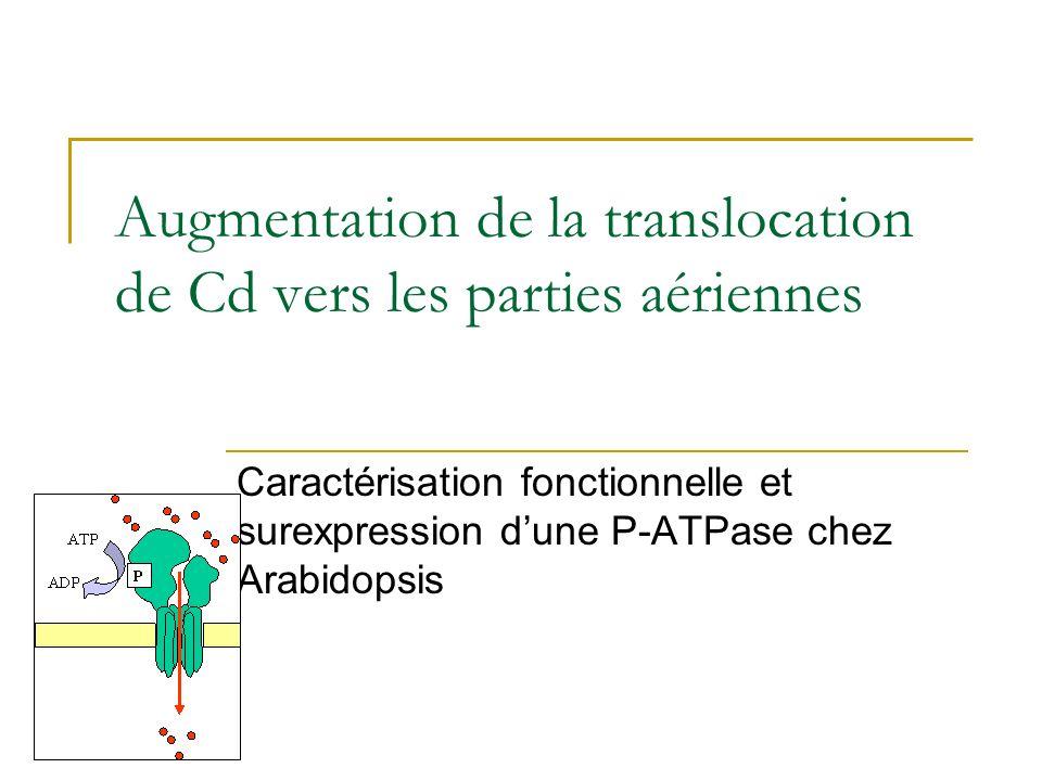 Phénotype des transformants Zhu et al. 1999 Plant Physiology