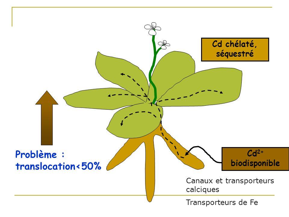 Augmentation de la translocation de Cd vers les parties aériennes Caractérisation fonctionnelle et surexpression dune P-ATPase chez Arabidopsis