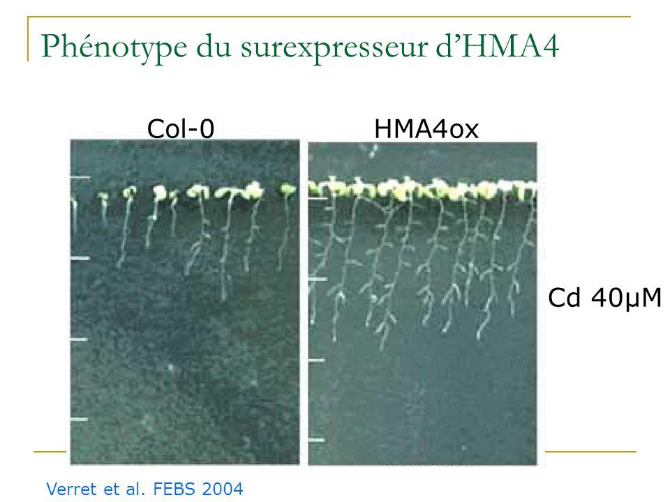 Expression tissulaire dAtHMA4 Verret et al. FEBS 2004