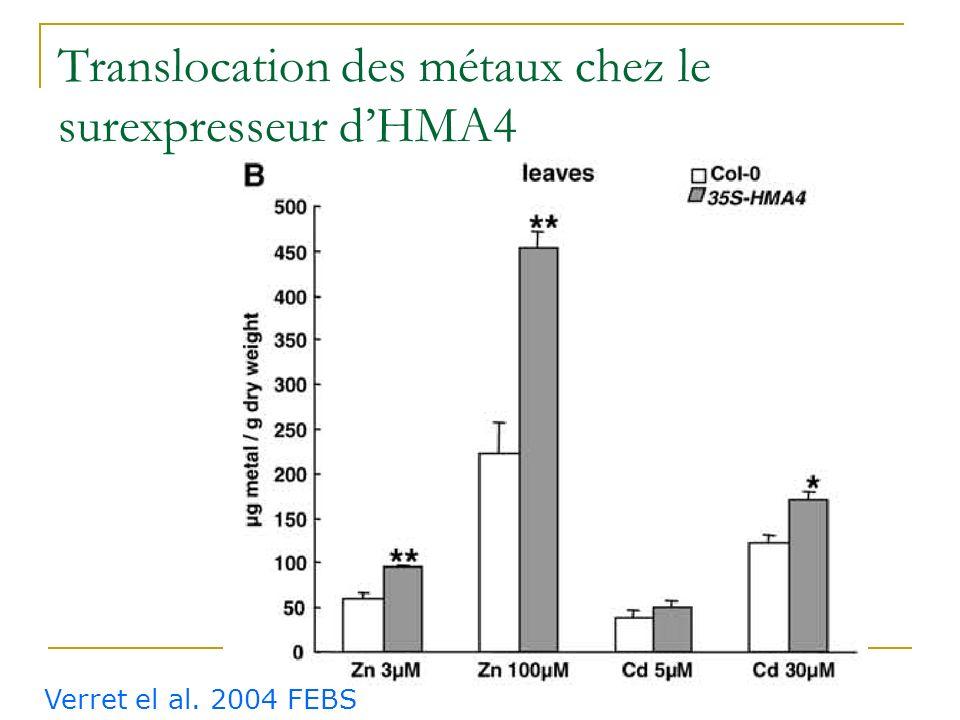 Phénotype du surexpresseur dHMA4 Col-0HMA4ox Cd 40µM Verret et al. FEBS 2004