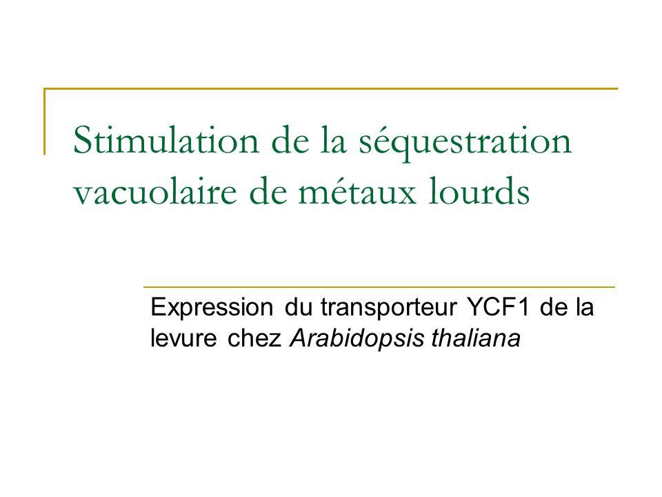 Translocation des métaux chez le surexpresseur dHMA4 Verret el al. 2004 FEBS