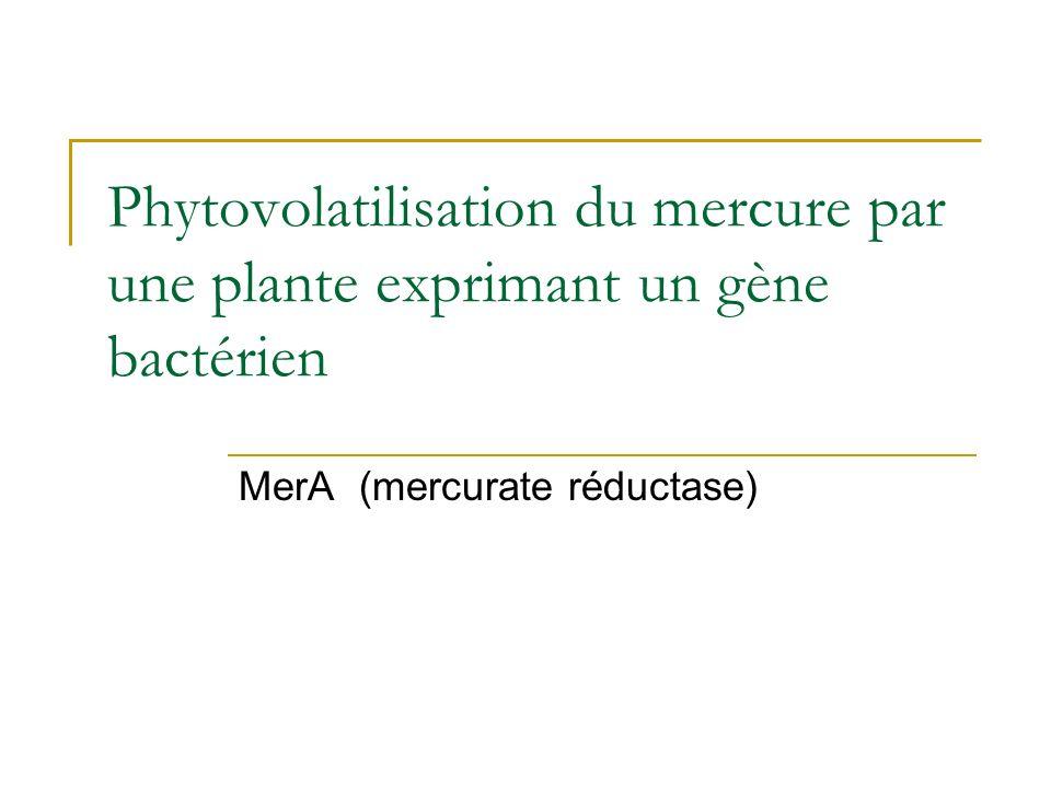 Amélioration de la tolérance et de laccumulation chez les surexpresseurs Song et al. (2003) Nature Biotechnology 21 (8): 914-919