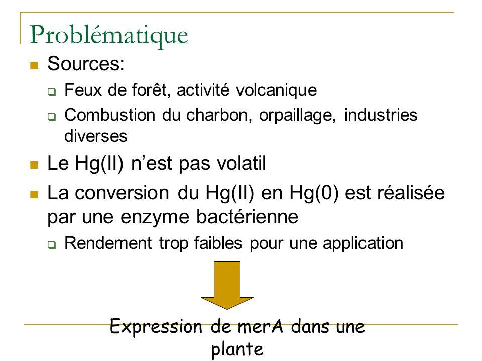 Phytovolatilisation du mercure par une plante exprimant un gène bactérien MerA (mercurate réductase)
