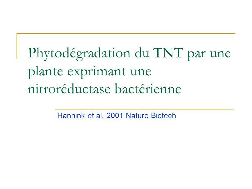Quelques exemples pour les composés organiques Favoriser la phytodégradation Expression de gènes de mammifères (P450 TCE) ou de bactéries (TNT) Favori