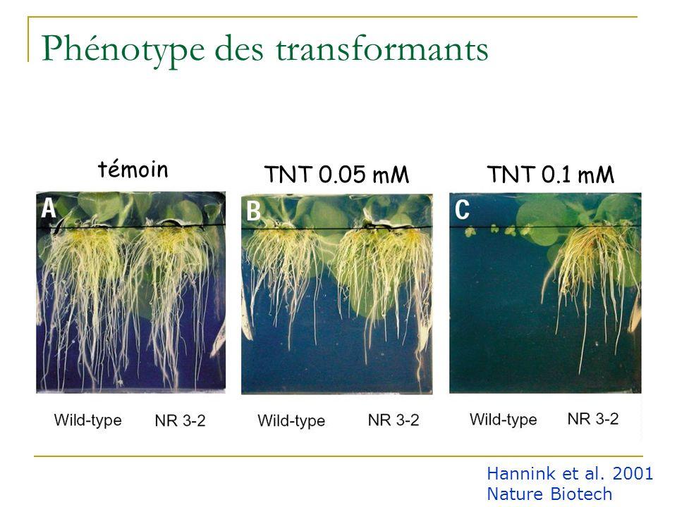 Problématique Les plantes sont capables de dégrader le TNT mais avec une efficacité faible croissance fortement réduite La nitroréductase de Enterobac