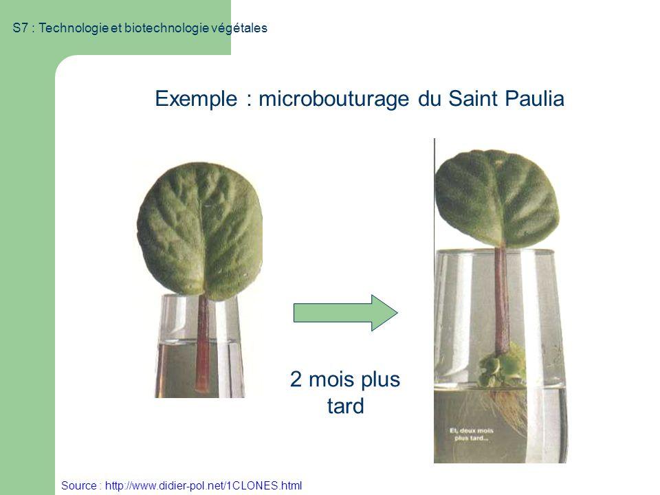 S7 : Technologie et biotechnologie végétales Exemple : microbouturage du Saint Paulia 2 mois plus tard Source : http://www.didier-pol.net/1CLONES.html