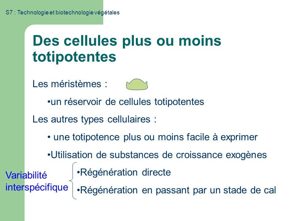S7 : Technologie et biotechnologie végétales Des cellules plus ou moins totipotentes Les méristèmes : un réservoir de cellules totipotentes Les autres