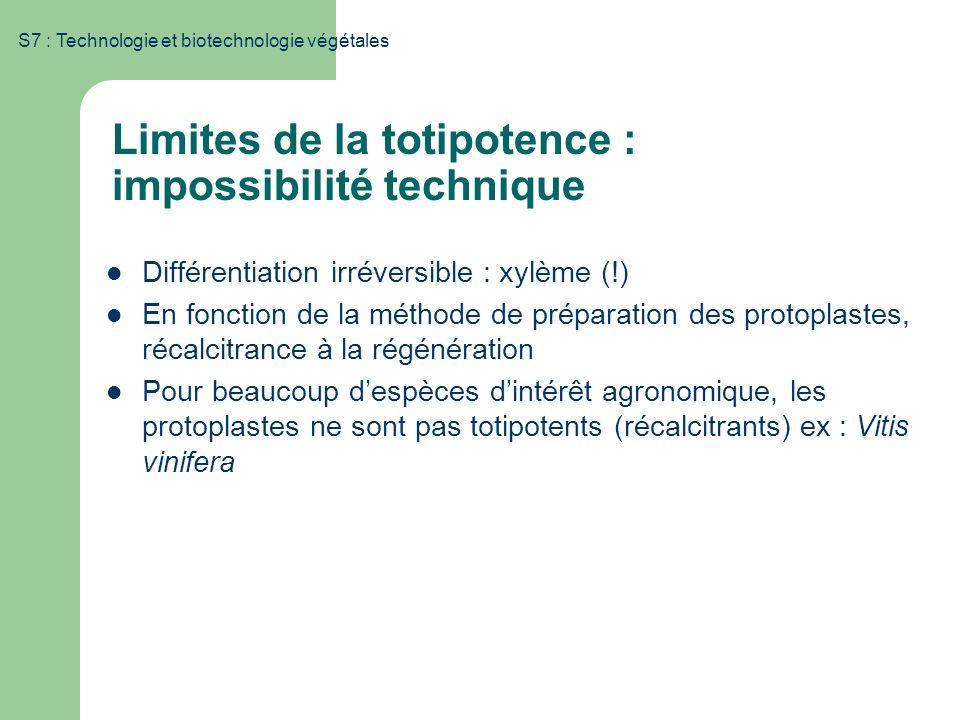 Limites de la totipotence : impossibilité technique Différentiation irréversible : xylème (!) En fonction de la méthode de préparation des protoplaste