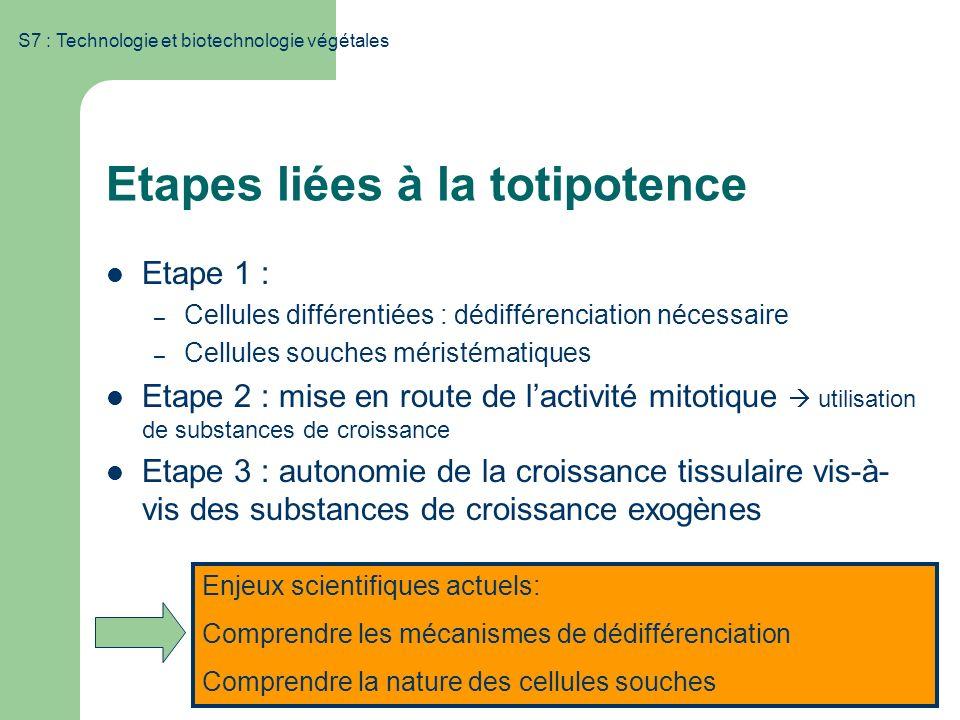 S7 : Technologie et biotechnologie végétales Etapes liées à la totipotence Etape 1 : – Cellules différentiées : dédifférenciation nécessaire – Cellule