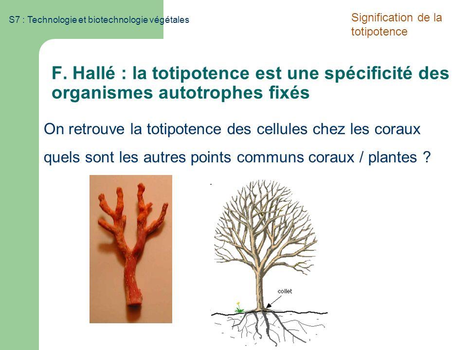 S7 : Technologie et biotechnologie végétales F. Hallé : la totipotence est une spécificité des organismes autotrophes fixés On retrouve la totipotence