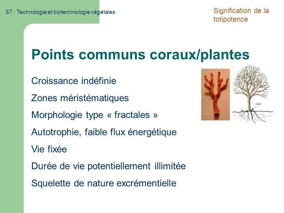 S7 : Technologie et biotechnologie végétales Points communs coraux/plantes Croissance indéfinie Zones méristématiques Morphologie type « fractales » A