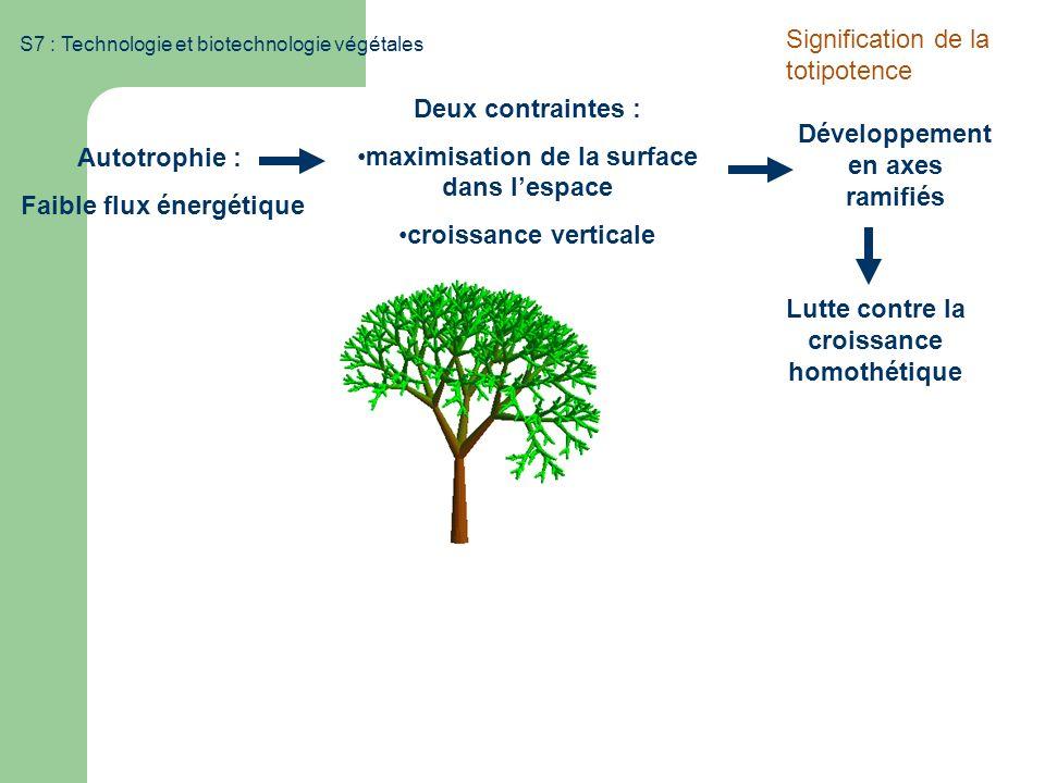 S7 : Technologie et biotechnologie végétales Autotrophie : Faible flux énergétique Deux contraintes : maximisation de la surface dans lespace croissan