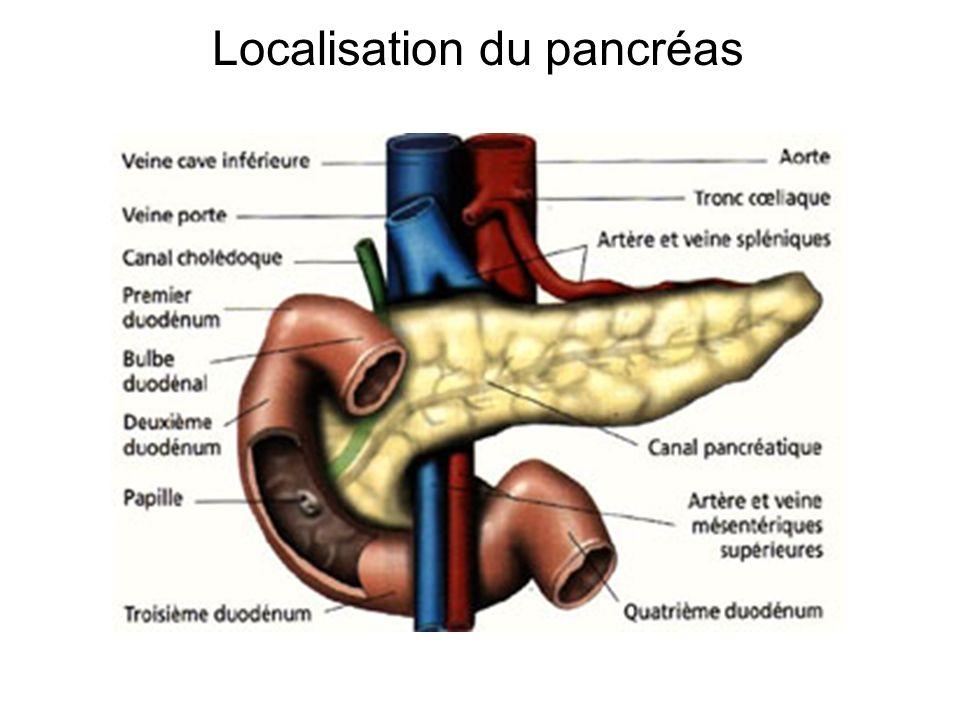 Localisation du pancréas