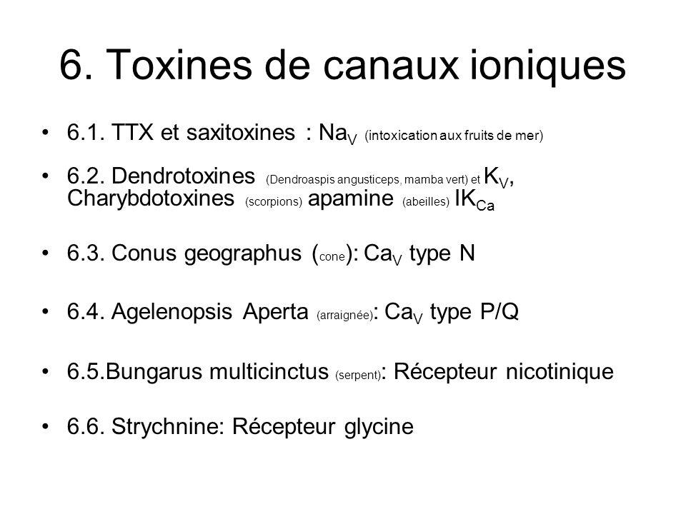 6. Toxines de canaux ioniques 6.1. TTX et saxitoxines : Na V (intoxication aux fruits de mer) 6.2. Dendrotoxines (Dendroaspis angusticeps, mamba vert)