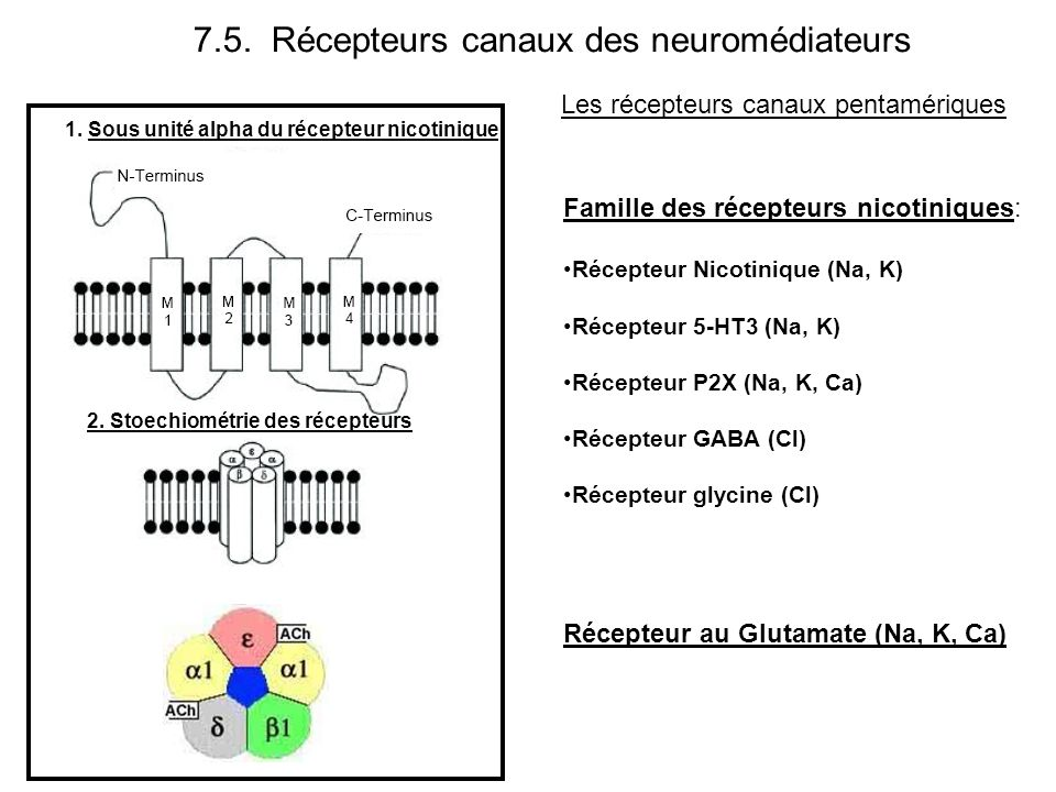 Récepteur au Glutamate (Na, K, Ca) Les récepteurs canaux pentamériques Famille des récepteurs nicotiniques: Récepteur Nicotinique (Na, K) Récepteur 5-