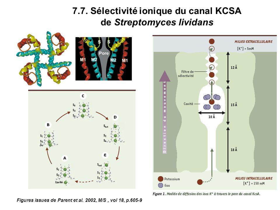 7.7. Sélectivité ionique du canal KCSA de Streptomyces lividans Figures issues de Parent et al. 2002, M/S, vol 18, p.605-9
