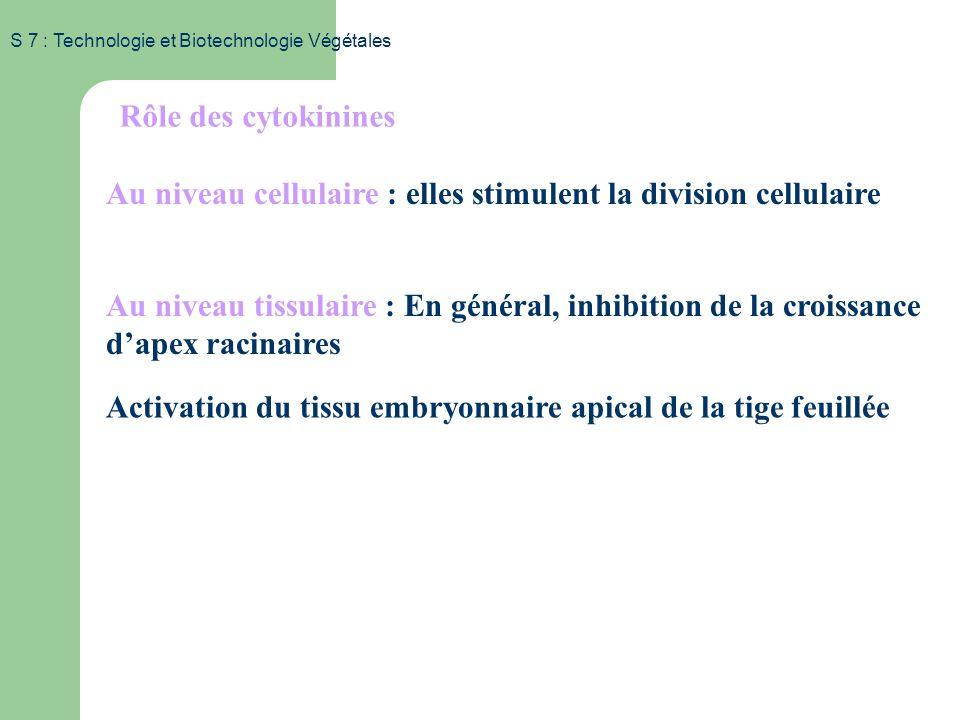 S 7 : Technologie et Biotechnologie Végétales Mode de production des cytokinines Site de production: Racines Transport vers les sites d action : - lev