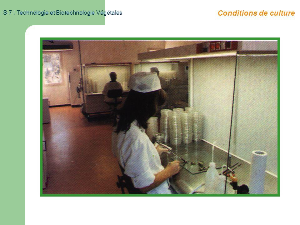 S 7 : Technologie et Biotechnologie Végétales callogenèse