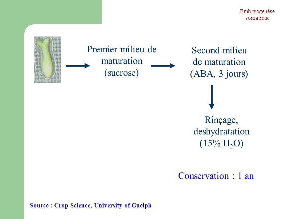 Premier milieu de maturation (sucrose) Second milieu de maturation (ABA, 3 jours) Rinçage, deshydratation (15% H 2 O) Conservation : 1 an Source : Cro