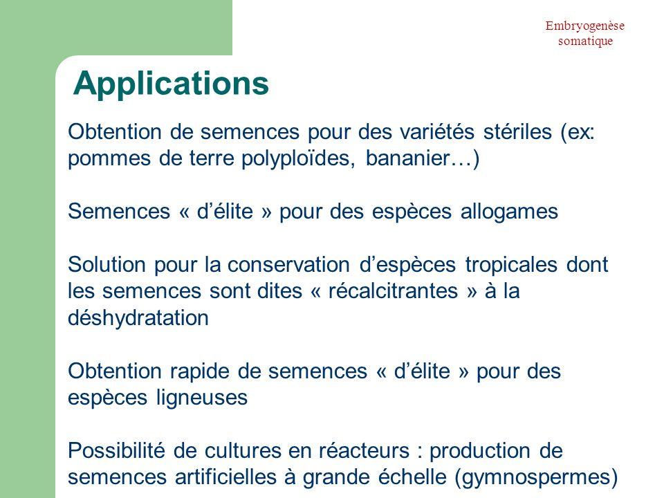 Obtention de semences pour des variétés stériles (ex: pommes de terre polyploïdes, bananier…) Semences « délite » pour des espèces allogames Solution