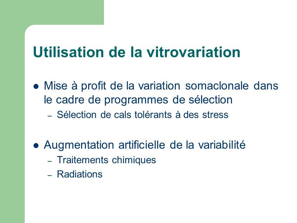Utilisation de la vitrovariation Mise à profit de la variation somaclonale dans le cadre de programmes de sélection – Sélection de cals tolérants à de