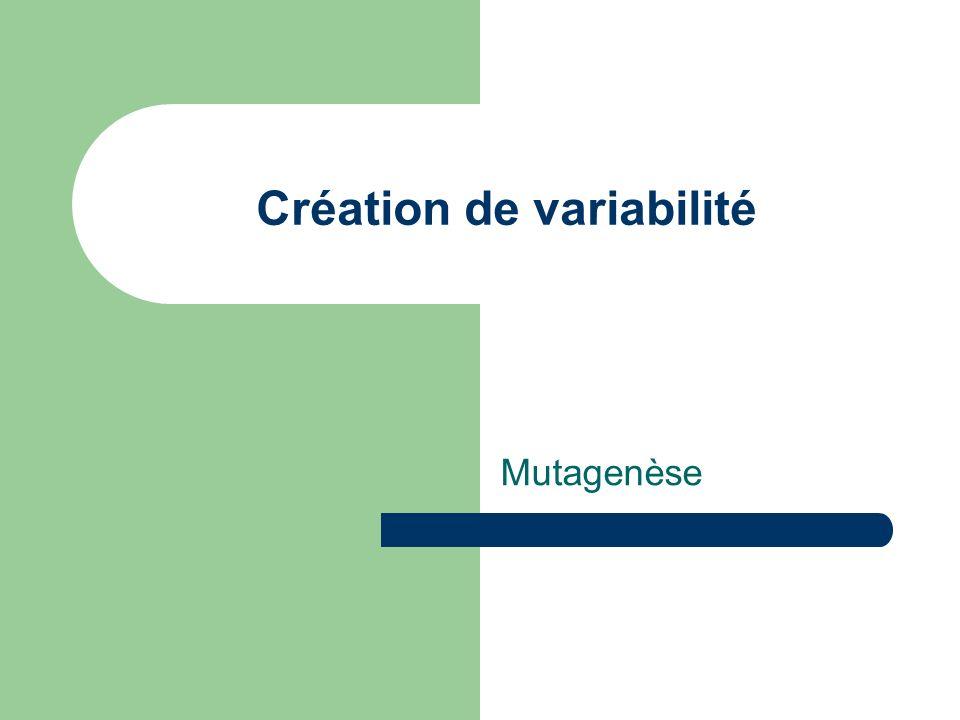 Création de variabilité Mutagenèse