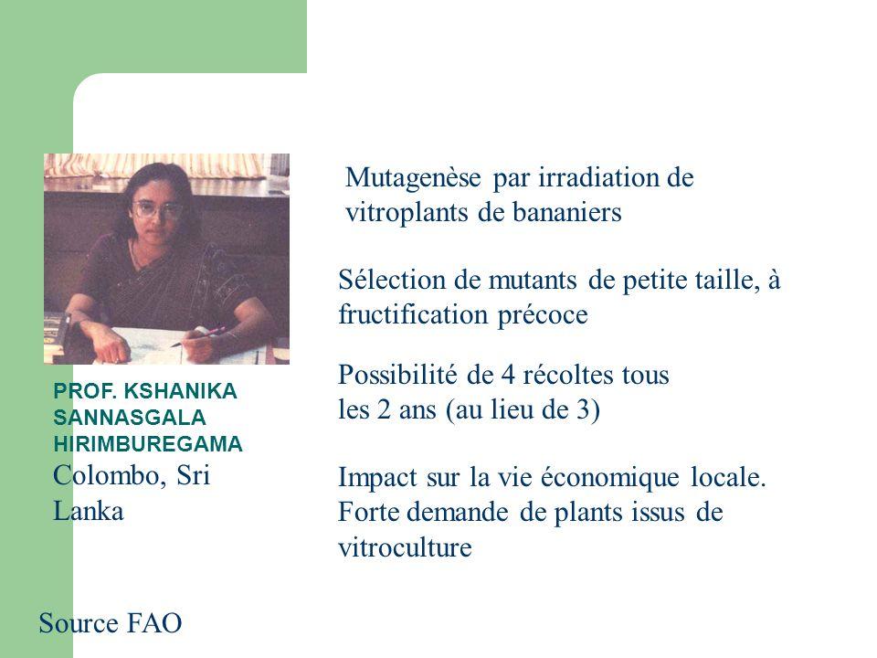 Source FAO PROF. KSHANIKA SANNASGALA HIRIMBUREGAMA Colombo, Sri Lanka Mutagenèse par irradiation de vitroplants de bananiers Sélection de mutants de p