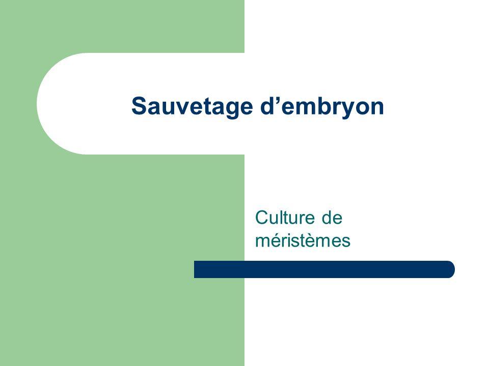 Sauvetage dembryon Culture de méristèmes