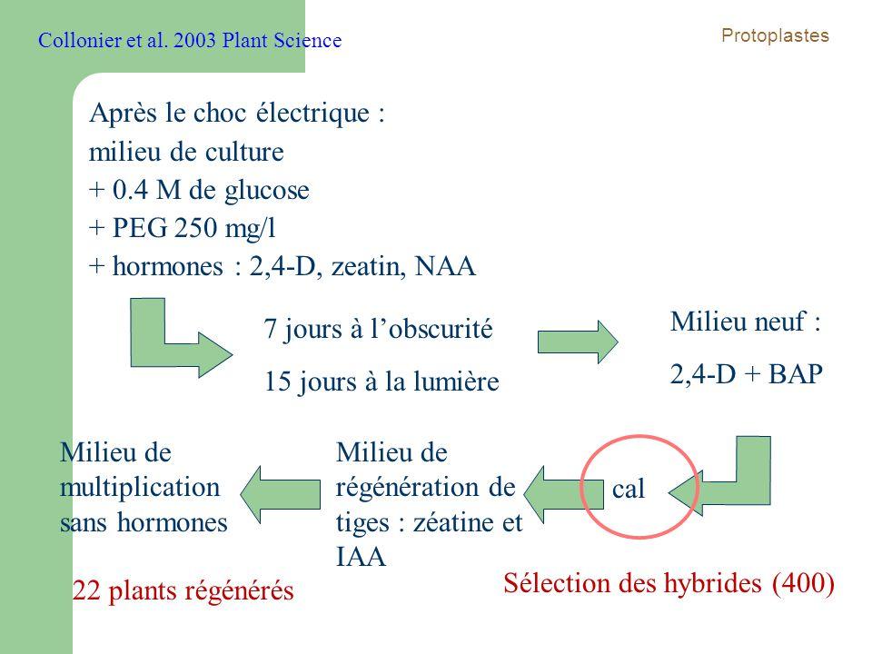 Après le choc électrique : milieu de culture + 0.4 M de glucose + PEG 250 mg/l + hormones : 2,4-D, zeatin, NAA 7 jours à lobscurité 15 jours à la lumi