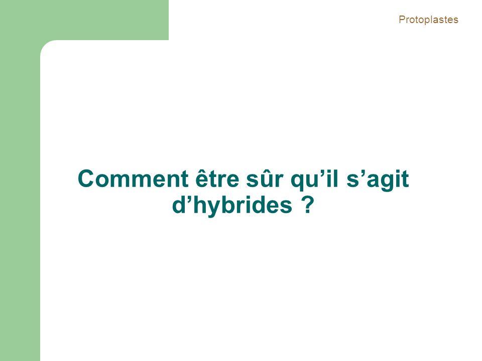 Comment être sûr quil sagit dhybrides ? Protoplastes