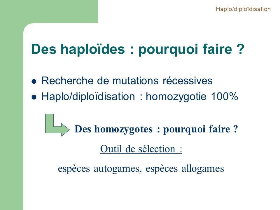 Des haploïdes : pourquoi faire ? Recherche de mutations récessives Haplo/diploïdisation : homozygotie 100% Des homozygotes : pourquoi faire ? Outil de