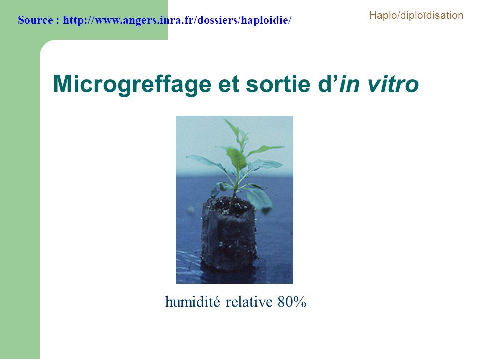 humidité relative 80% Microgreffage et sortie din vitro Source : http://www.angers.inra.fr/dossiers/haploidie/ Haplo/diploïdisation