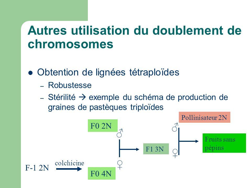 Autres utilisation du doublement de chromosomes Obtention de lignées tétraploïdes – Robustesse – Stérilité exemple du schéma de production de graines