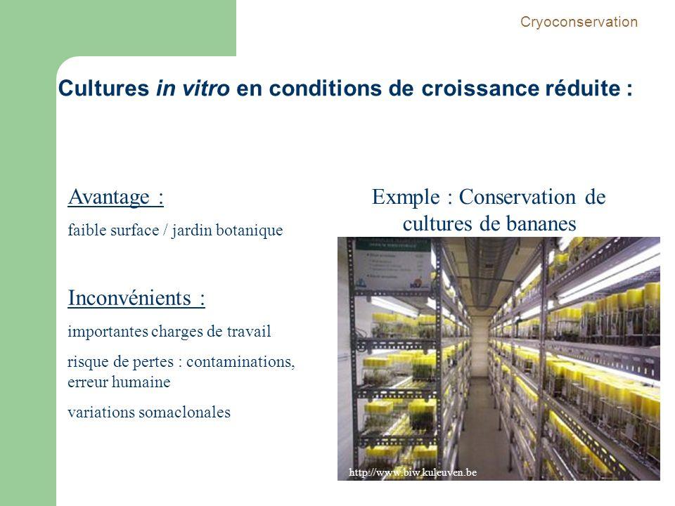 Avantage : faible surface / jardin botanique Inconvénients : importantes charges de travail risque de pertes : contaminations, erreur humaine variatio