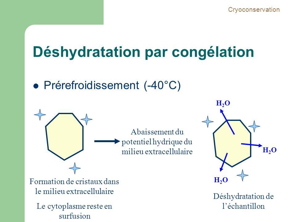 Déshydratation par congélation Prérefroidissement (-40°C) Formation de cristaux dans le milieu extracellulaire Le cytoplasme reste en surfusion Abaiss