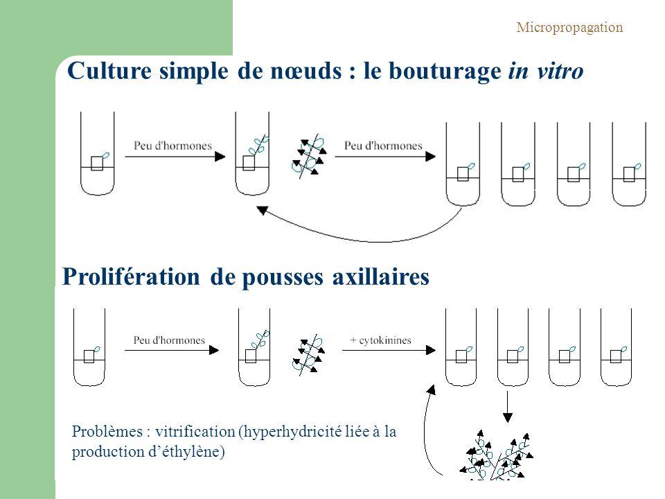 Culture simple de nœuds : le bouturage in vitro Prolifération de pousses axillaires Problèmes : vitrification (hyperhydricité liée à la production dét