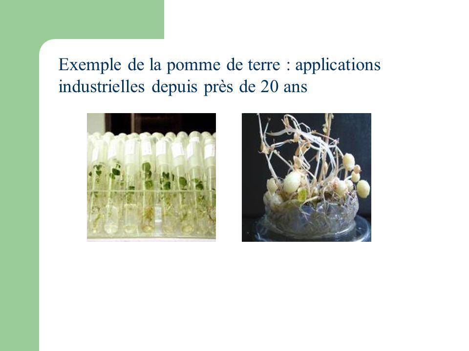 Exemple de la pomme de terre : applications industrielles depuis près de 20 ans