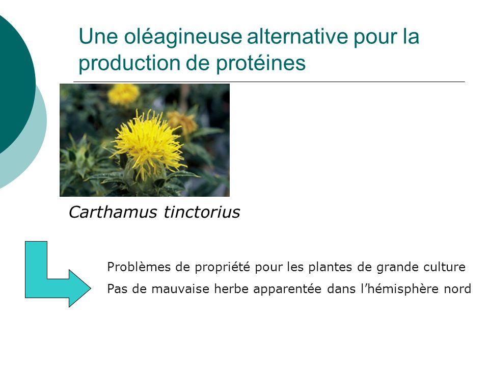 Une oléagineuse alternative pour la production de protéines Carthamus tinctorius Problèmes de propriété pour les plantes de grande culture Pas de mauv