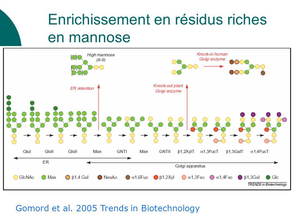 Gomord et al. 2005 Trends in Biotechnology Enrichissement en résidus riches en mannose