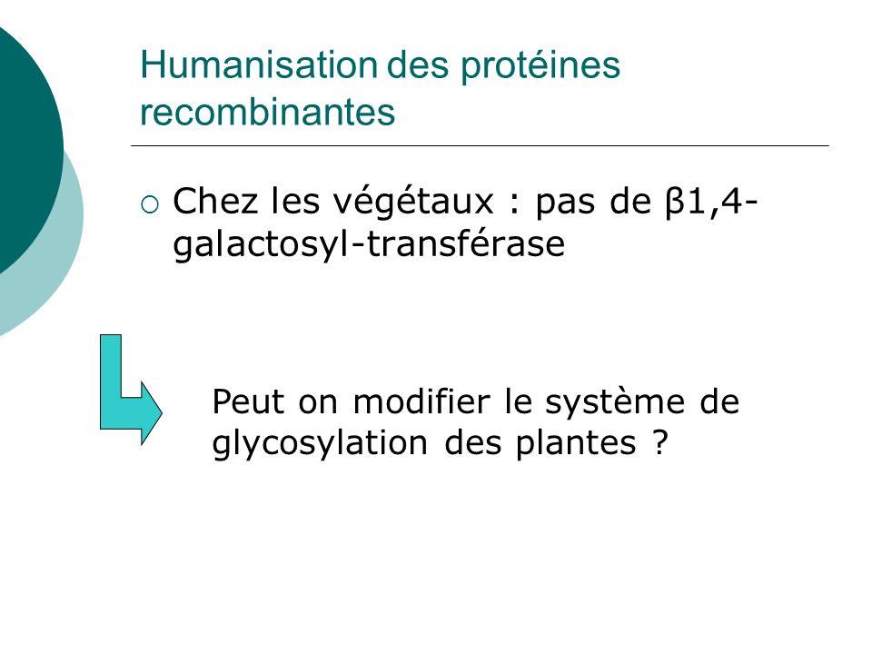 Humanisation des protéines recombinantes Chez les végétaux : pas de β1,4- galactosyl-transférase Peut on modifier le système de glycosylation des plan