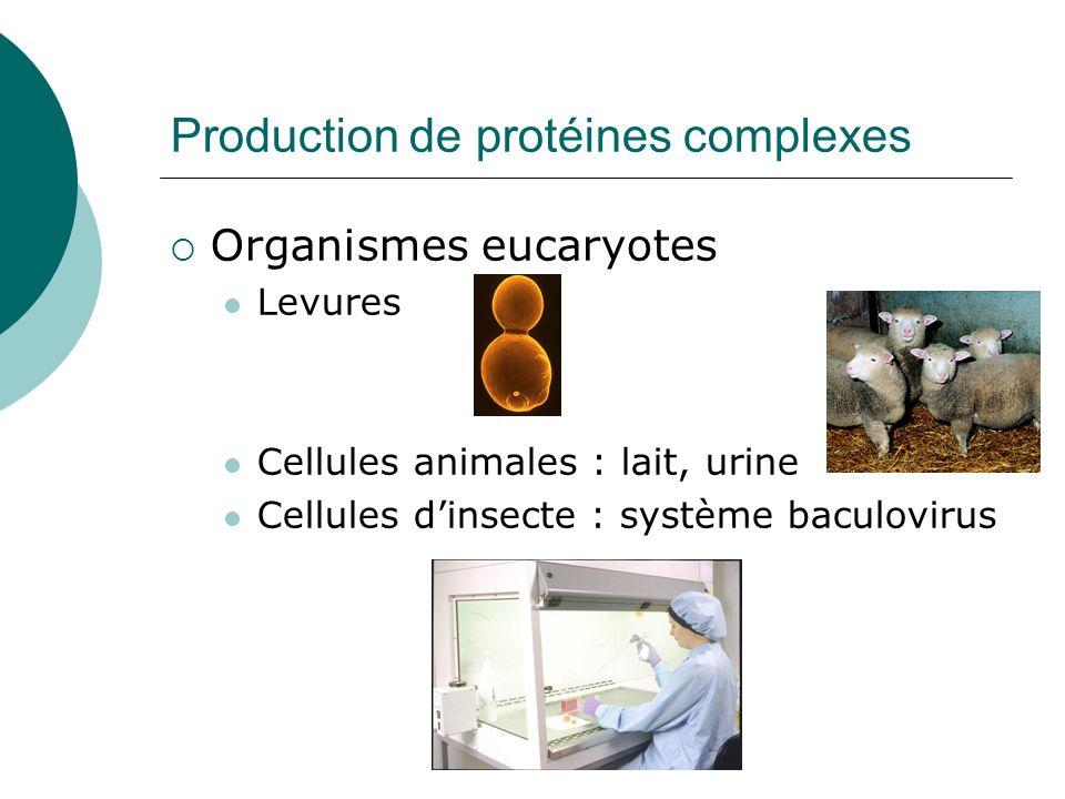 Exsudats racinaires Purification des protéines : Jusquà 90% du coût de production Système dexsudation racinaire Exsudation de substances carbonées (dont protéines) Rhizosphère : racine + microflore