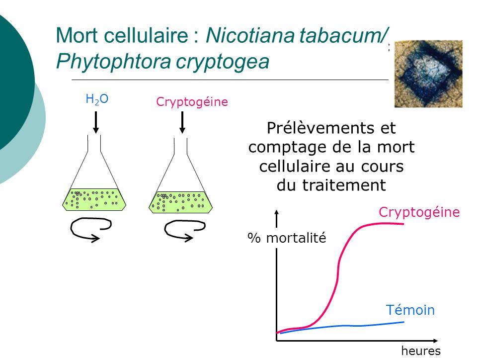 Mort cellulaire : Nicotiana tabacum/ Phytophtora cryptogea H2OH2O Cryptogéine Prélèvements et comptage de la mort cellulaire au cours du traitement Cryptogéine heures % mortalité Témoin