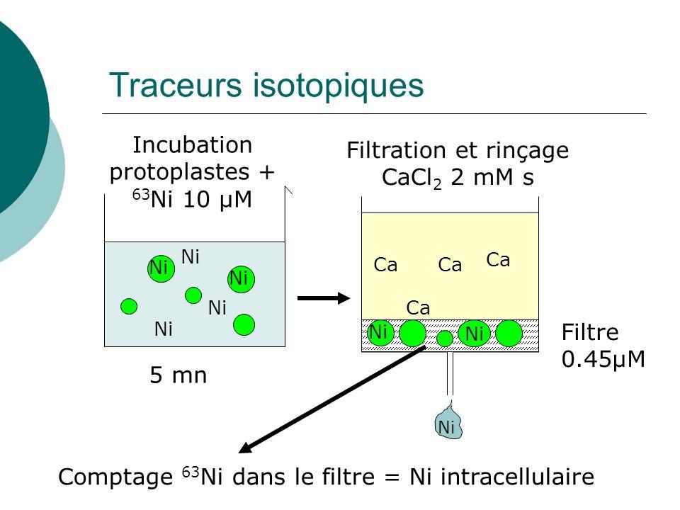 Traceurs isotopiques Ni Incubation protoplastes + 63 Ni 10 µM 5 mn Ca Filtration et rinçage CaCl 2 2 mM s Filtre 0.45µM Comptage 63 Ni dans le filtre = Ni intracellulaire Ni