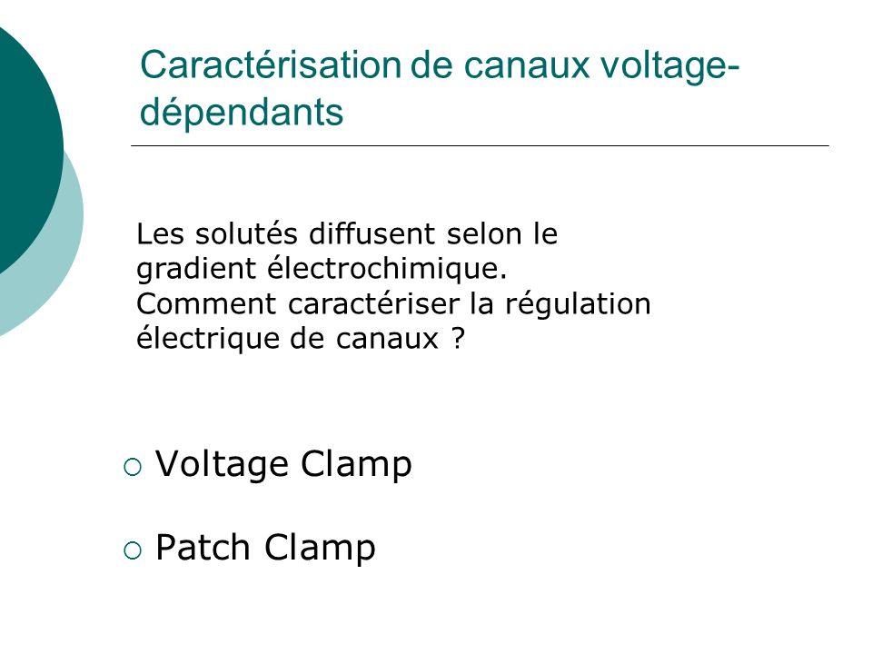 Caractérisation de canaux voltage- dépendants Voltage Clamp Patch Clamp Les solutés diffusent selon le gradient électrochimique.