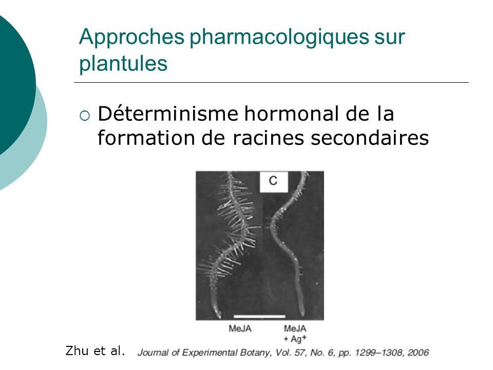 Approches pharmacologiques sur plantules Déterminisme hormonal de la formation de racines secondaires Zhu et al.